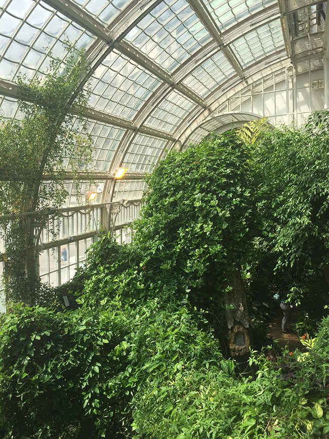 Butterfly House - Burggarten 2