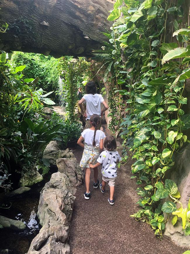 Butterfly House - Burggarten 3