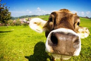 De ce aleg lactate ecologice pentru familia mea?